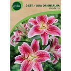 Cebulki kwiatów STARGAZER Lilia orientalna 2szt. GEOLIA