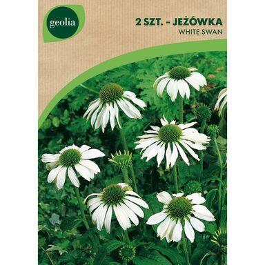 Cebulki kwiatów WHITE SWAN Jeżówka 2szt. GEOLIA