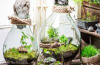 Jak zrobić i pielęgnować ogród w słoiku?