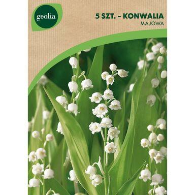 Cebulki kwiatów Konwalia majowa 5szt. GEOLIA