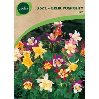 Cebulki kwiatów MIX Orlik 3szt. GEOLIA