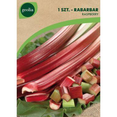 Cebulki warzyw RASPBERRY Rabarbar 1szt. GEOLIA