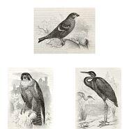 Zestaw 3 plakatów Ptaki 30 x 40 cm