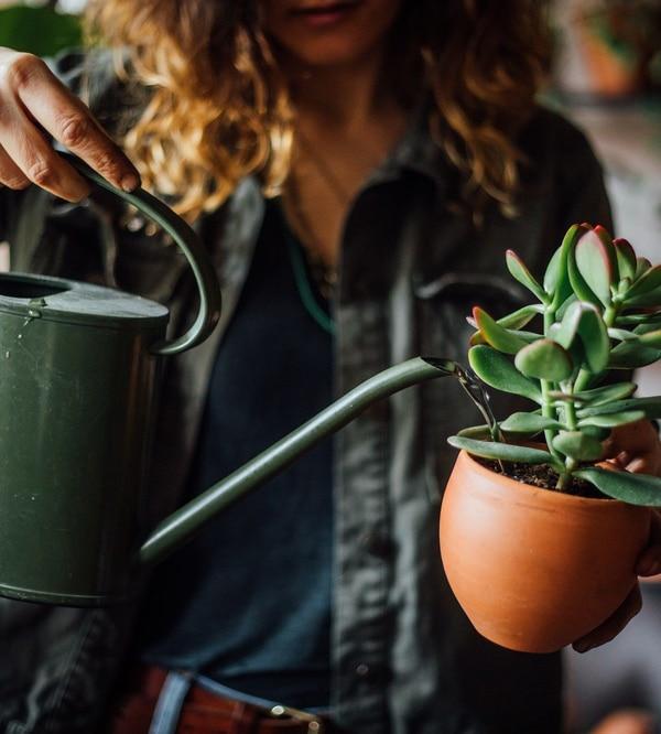 Podlewanie roślin pokojowych