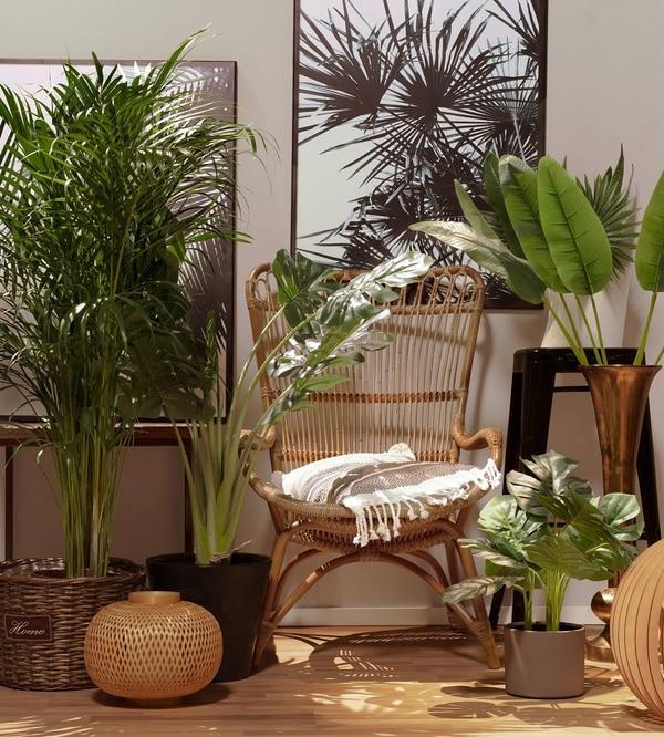 Rośliny tropikalne w domu