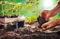 Uprawa współrzędna, czyli co siać obok siebie w ogrodzie warzywnym