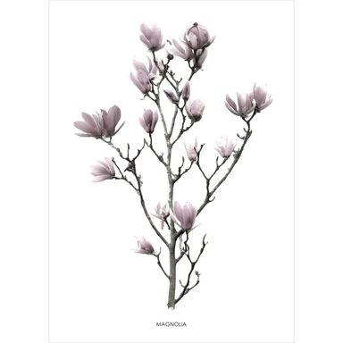 Kanwa Magnolia 50 x 70 cm