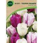 Tulipan FLAG MIX 20 szt. cebulki kwiatów GEOLIA