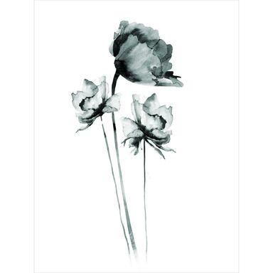 Plakat Czarna Róża 30 x 40 cm