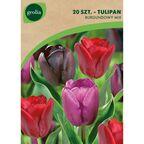 Tulipan DARK MIX 20 szt. cebulki kwiatów GEOLIA