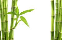 Bambusy w domu i ogrodzie