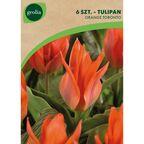 Tulipan niski ORANGE TORONTO 6 szt. cebulki kwiatów GEOLIA