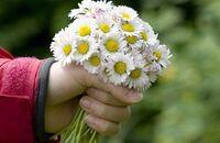 Jadalne kwiaty popularnych roślin