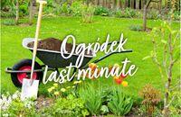 Ogródek last minute – co można sadzić w kwietniu?